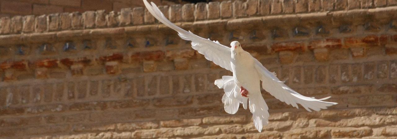 O Espírito Santo: O Melhor Amigo do Crente